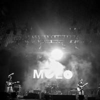moloelebar_miniatura